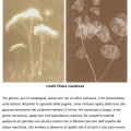 About Garden