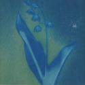 Non era abbellirvi blu #173