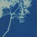 Non era abbellirvi blu #184