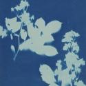 Non era abbellirvi blu #190