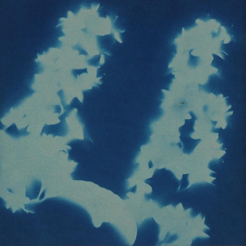 Non era abbellirvi blu #182